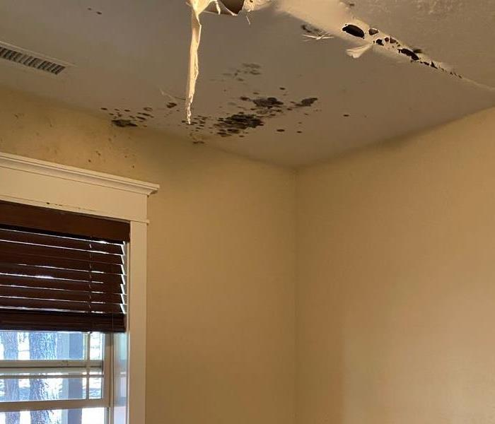 A moldy ceiling that is caving in due to water damage. The home is in Flagstaff, Arizona